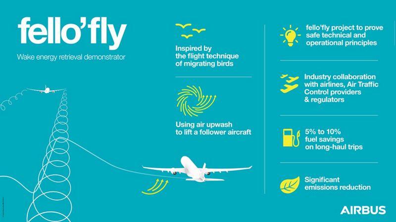 Infographic fello fly